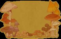 Pilzkarte