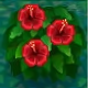 Alle Insel-Items Redhibiscus