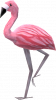 Mrs Flamingo